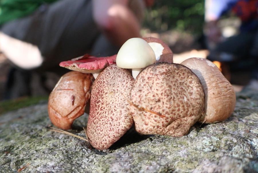 Shroom Walk: Bio/Chem Club Eats Mushrooms in the Woods
